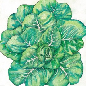 Heirloom-Lettuce-Tom-Thumb1.jpg