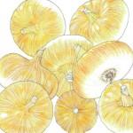 Heirloom-Onion-Bianca-Di-Maggio1.jpg