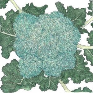 Organic-Heirloom-Broccoli-Calabrese.jpg