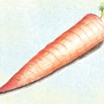 Organic-Heirloom-Carrot-St-Valery.jpg