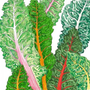 Organic-Heirloom-Chard-Five-Color-Silverbeet.jpg