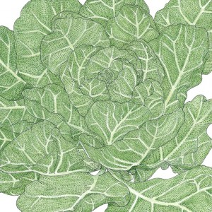 Organic-Heirloom-Collard-Greens-Champion.jpg