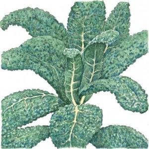 Organic-Heirloom-Kale-Lacinato.jpg