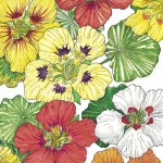 Organic-Heirloom-Nasturtium-Dwarf-Jewel-Mix.jpg