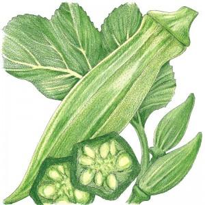 Organic-Heirloom-Okra-Clemson-Spineless.jpg