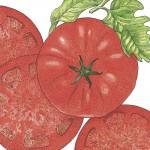 Organic-Heirloom-Tomato-Beefsteak.jpg