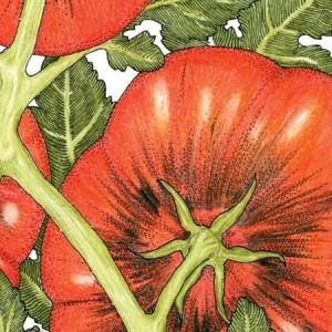 Organic-Heirloom-Tomato-Black-Krim.jpg