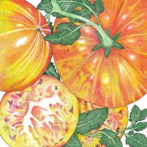 Organic-Heirloom-Tomato-Pinneapple.jpg