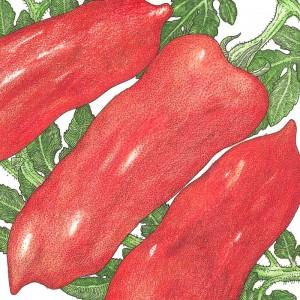 Organic-Heirloom-Tomato-San-Marzano.jpg
