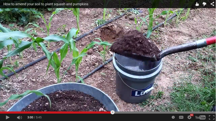 How to Amend your Soil to Plant Squash and Pumpkins