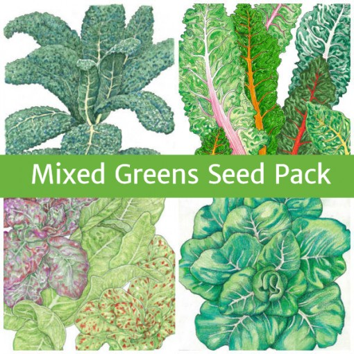 Seed Pack Mixed Greens