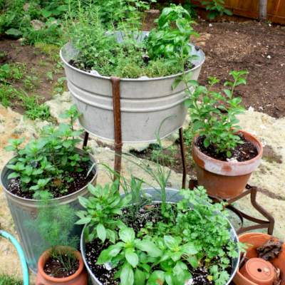 Container Gardening Pack