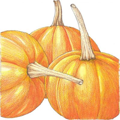 Organic-Heirloom-Pumpkin-Small-Sugar