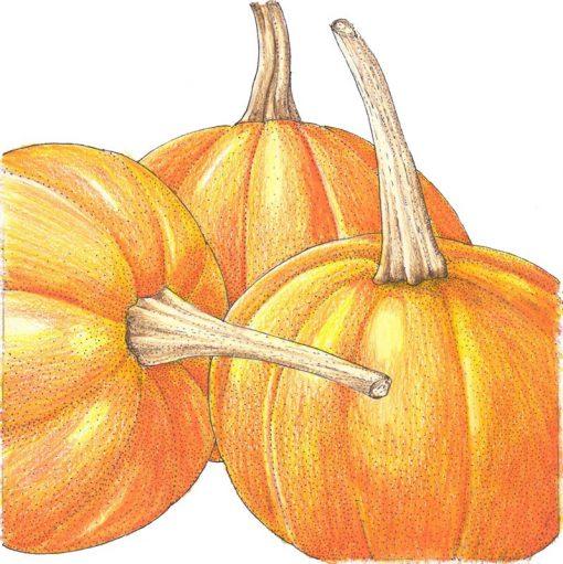 Organic-Heirloom-Pumpkin-Small-Sugar