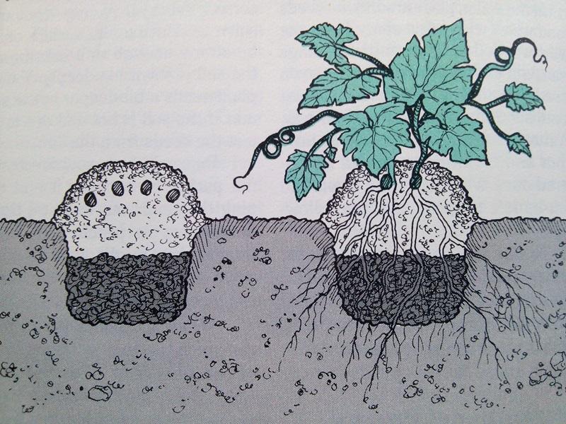 Squash hill planting