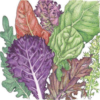 Gourmet Lettuce Mix