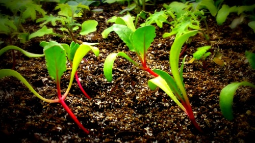Starting Seeds and Caring for Seedlings