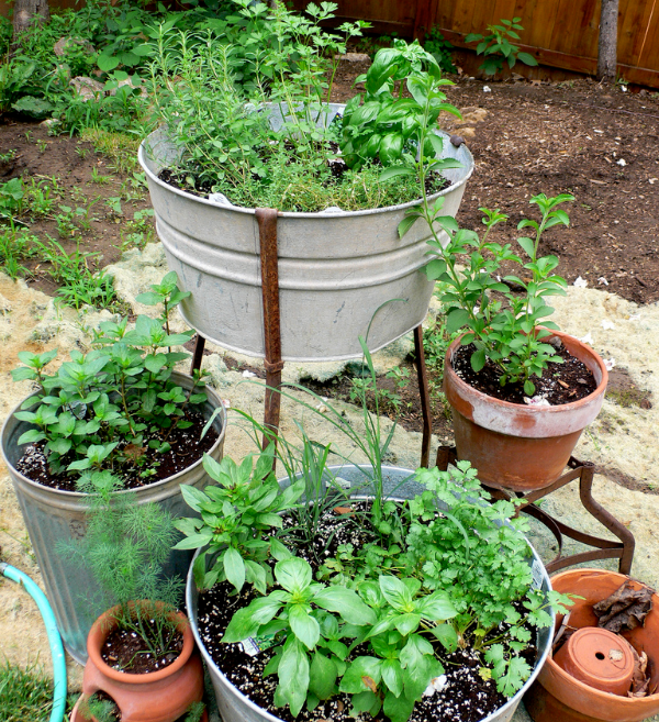 Herb Gardening Pack Seeds For Generations