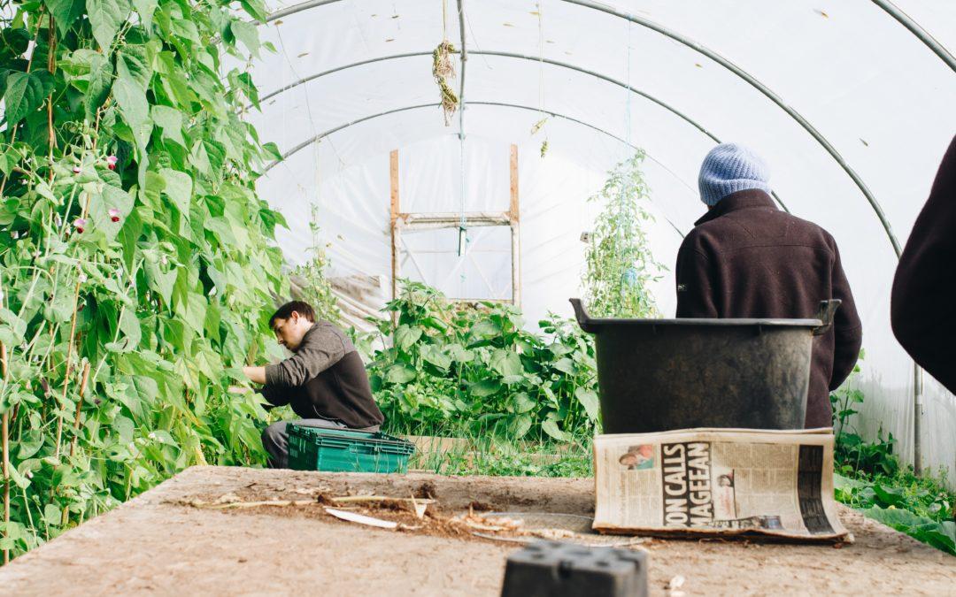 Using Season Extension in Your Fall Garden