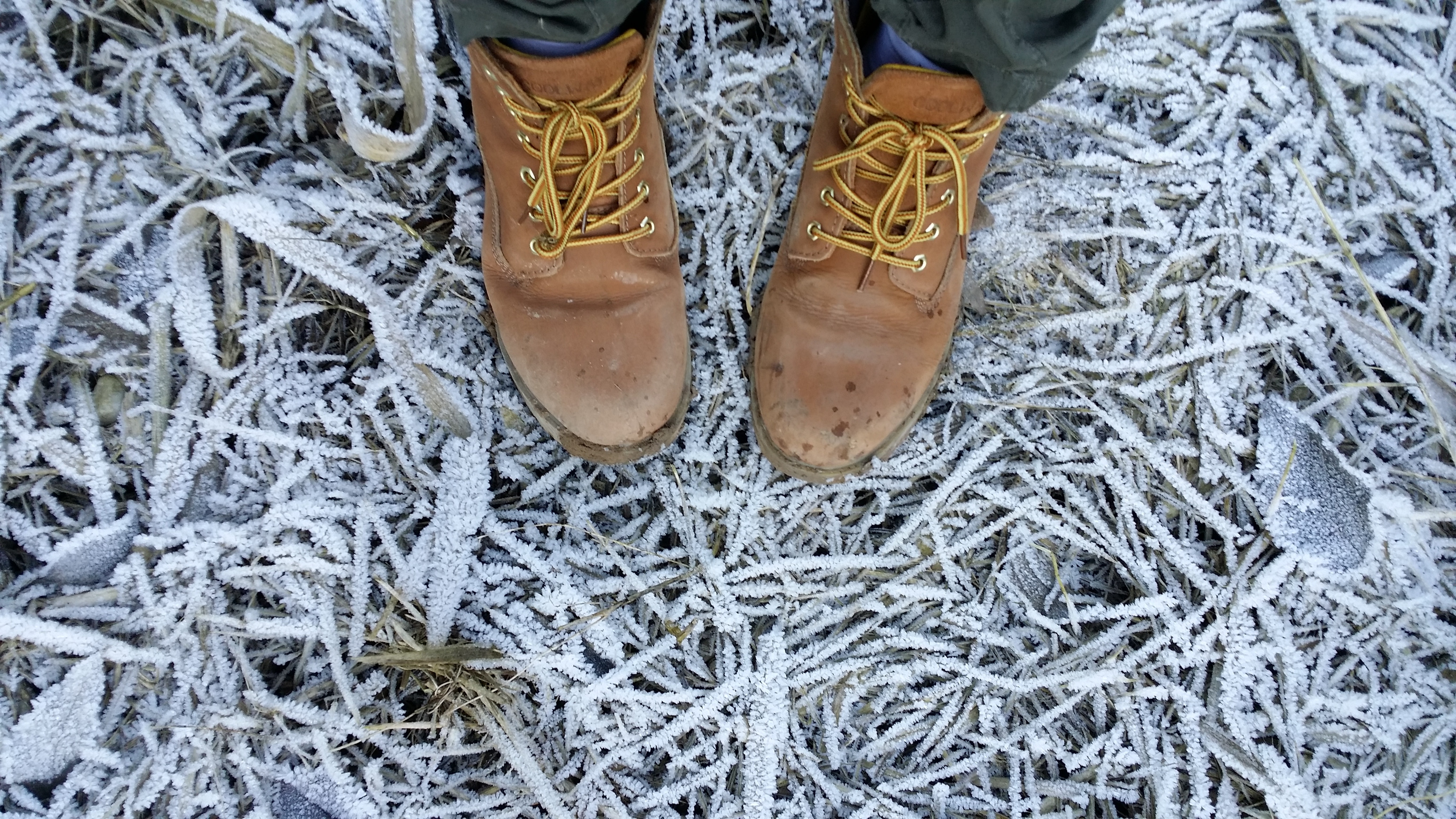 Boots in frosty grass.