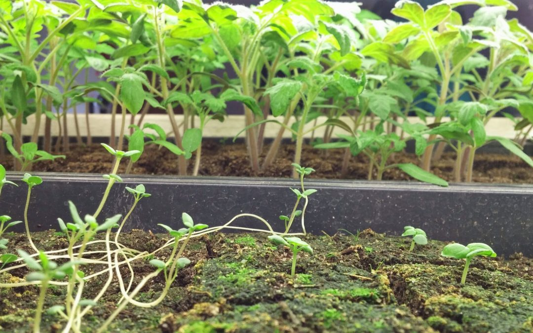 How to Grow Seedlings: Germination Requirements