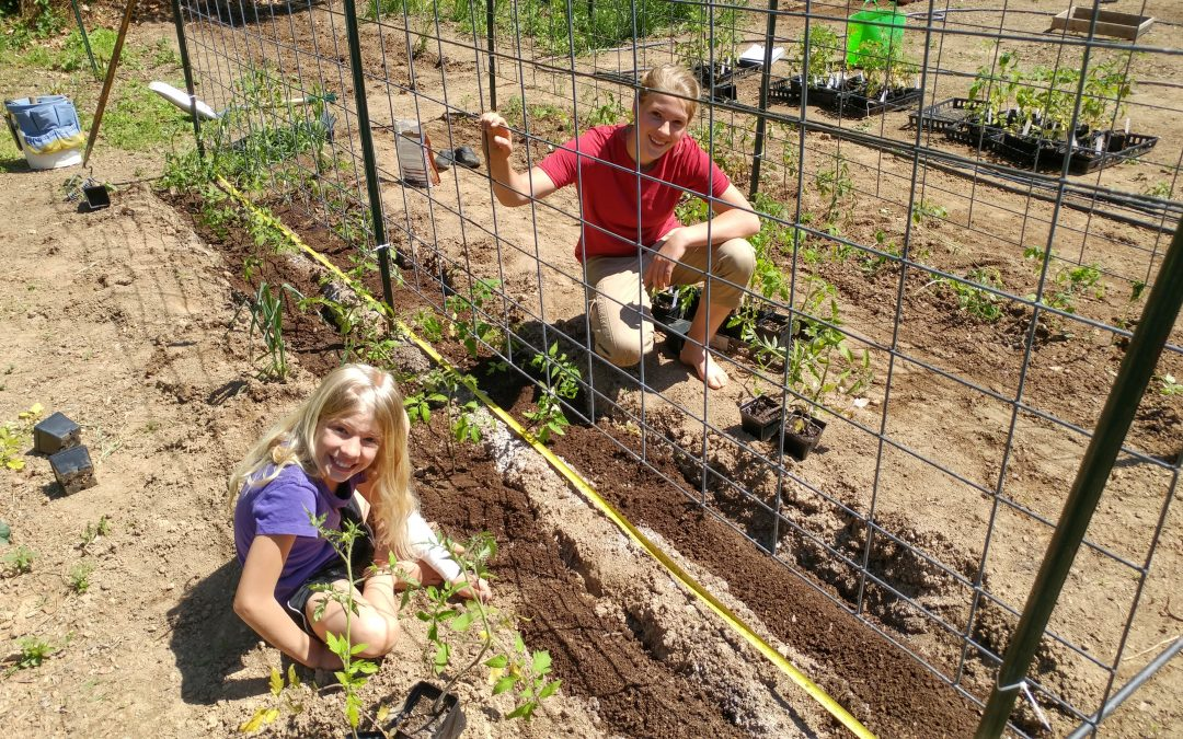 How to Care for Seedlings: Tracking, Managing, & Hardening Young Plants